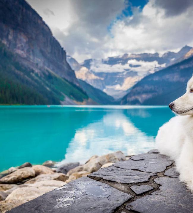 6 Animales que pueden detectar sismos