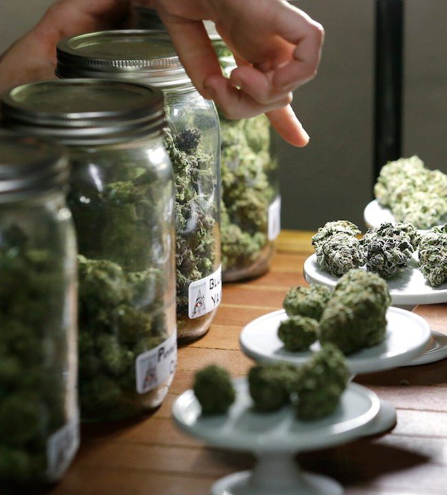 cannabis marihuana variedades