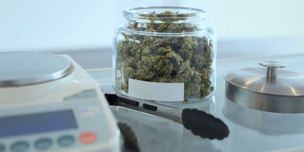 ¿Qué está permitido con la nueva ley para regular el  cannabis en México? El Cannabis Legal es una realidad en nuestro país. Conoce la ley.